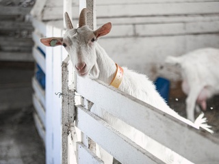 koza-nostra-farm2