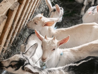 koza-nostra-farm3