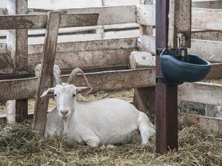 koza-nostra-farm5