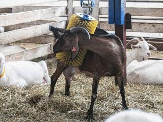 koza-nostra-farm6