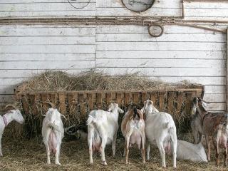 koza-nostra-farm7