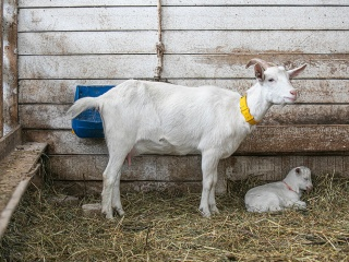 koza-nostra-farm8