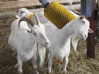 koza-nostra-farm9