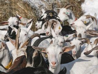 koza-nostra-farm92