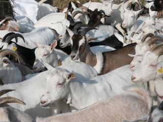 koza-nostra-farm93